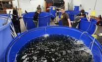 Ezi-action® Drum Pumps are used in fish farming industry