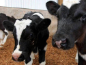 Benefits Of Using Drum Pumps For Calving